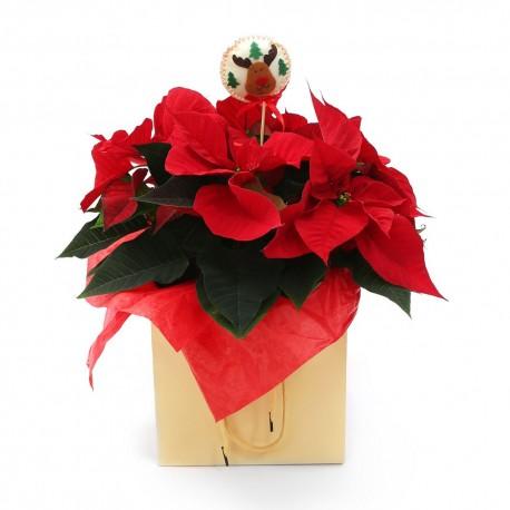 Symbol of Christmas